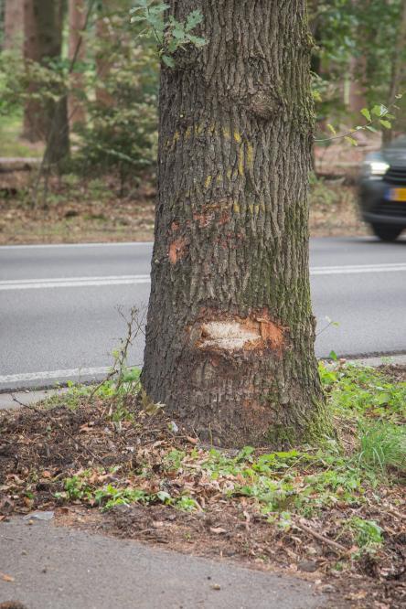 Auto beland door kopstaart botsing tegen boom langs Soerelseweg. - ©NWVFoto.nl