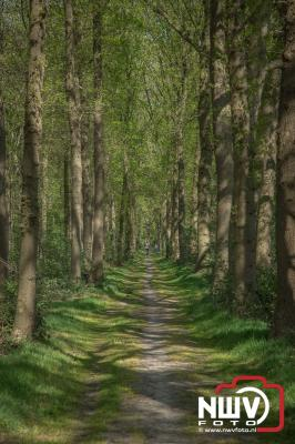 Natuur op landgoed Schouwenburg 't Harde. - ©NWVFoto.nl